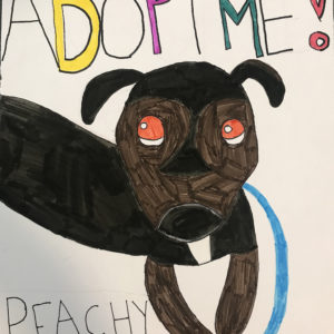 Adoption poster of a dog named Peachy.