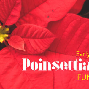 Graphic featuring poinsettia